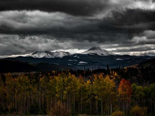 autumn fall trees plant mountain