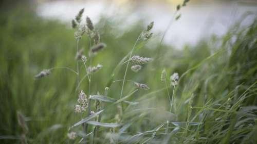 nature grass buffalo stems stalks
