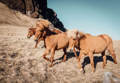 nature animals horses brown landscape