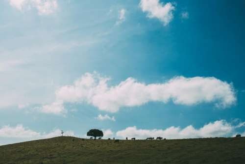 nature landscape plains grass trees