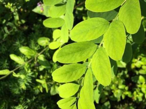 green leaves plants trees bushes