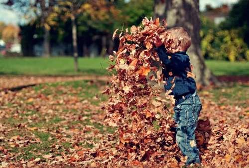 leaves fall autumn boy child