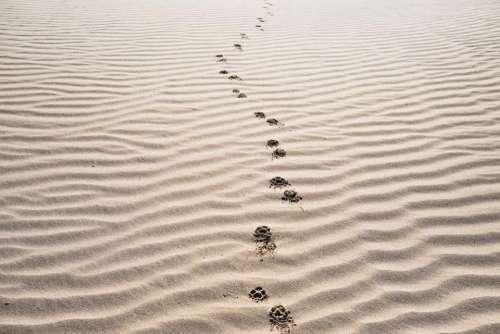 sand footprints beach desert landscape