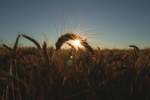 morning sunshine sunrise sky nature