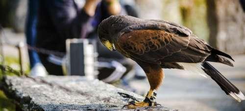 eagle bird animal outdoor