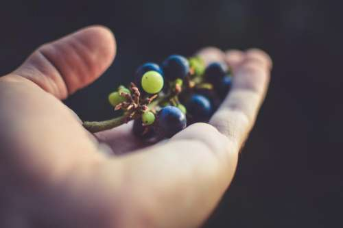 grapes fruits food hands palm
