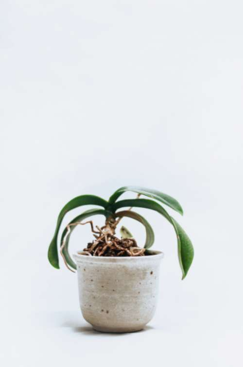 minimal white house plant plant leaves