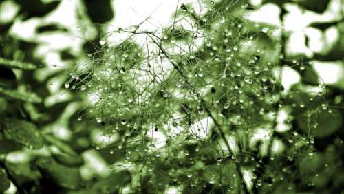 green plants nature water drops