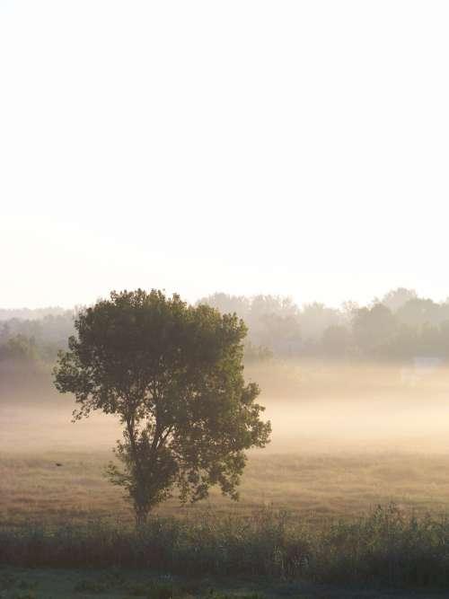 fog morning summer dawn ukraine