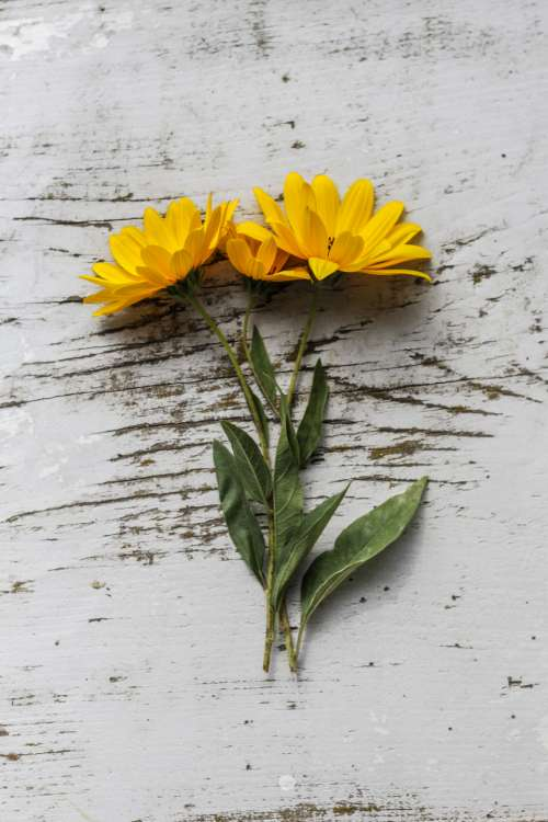 flat lay yellow flowers rustic table