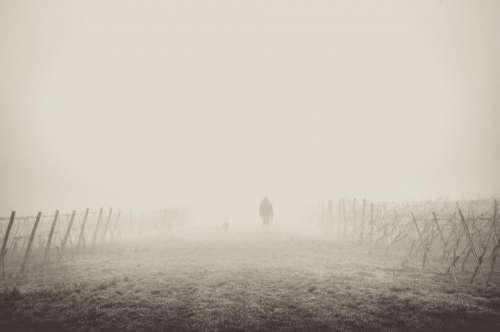fog foggy nature people shadow