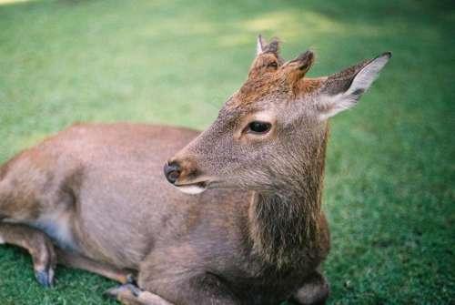green grass lawn field animal