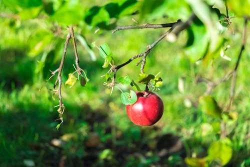 apple amazing photo autumn canon