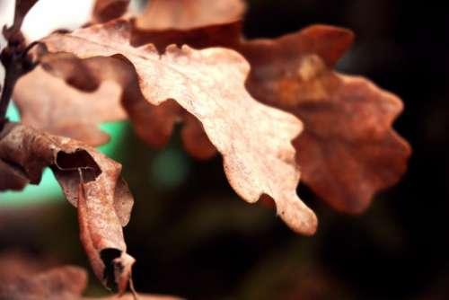 dry environment leaf tree plant