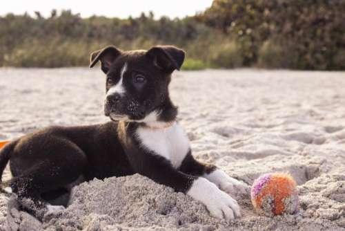 dog pet ball beach sand