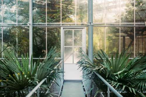 green plant building glass path