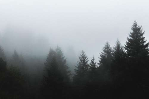 trees forest woods nature fog