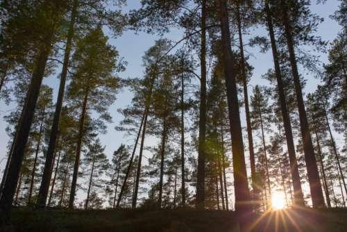 trees plant nature mountain highland