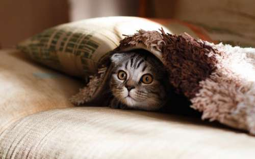 pillow case blanket cat animal
