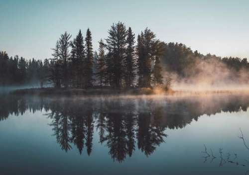 trees plants nature fog cold