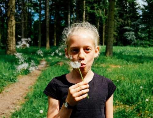 dandelion flower plant nature blow