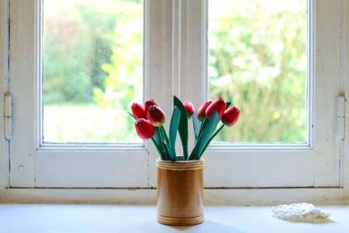 flowers rose windows white red