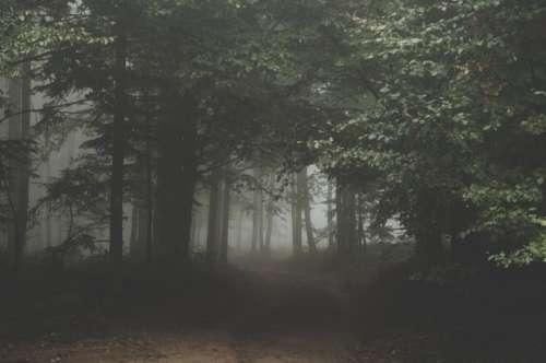 nature landscape forest trees fog