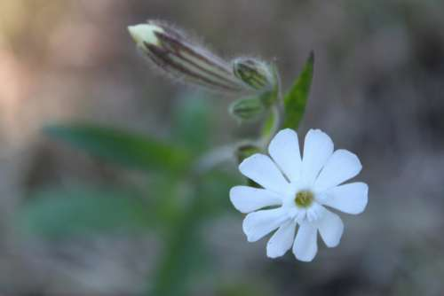 white flower blossom bloom nature