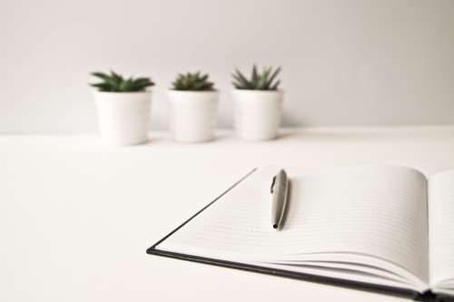 minimal cactus desk white nature