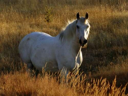 white horse pasture sunny animal