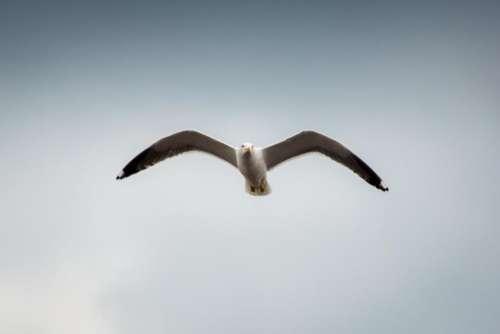 animals birds seagulls flight flying