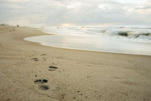 beach sand footprints shore ocean