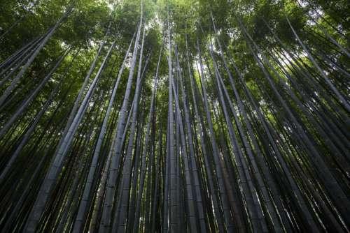 nature landscape woods forest trees