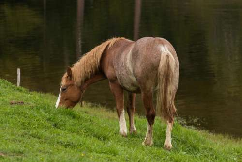 horse animal eating green grass