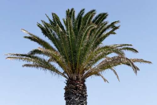 palm trees blue sky nature outdoors