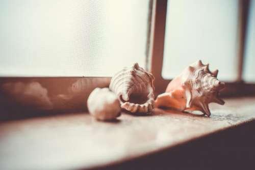 sea shells window sill objects decor