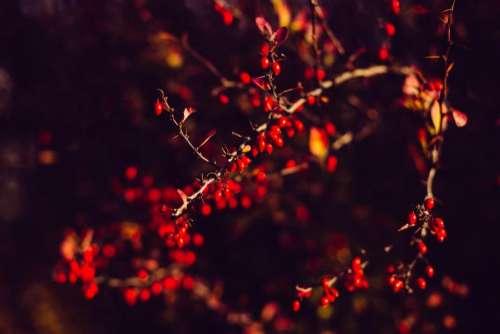 tree branch plant nature dark