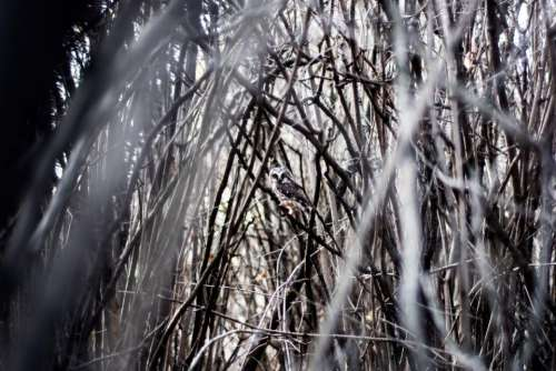 nature branches twigs stems trees
