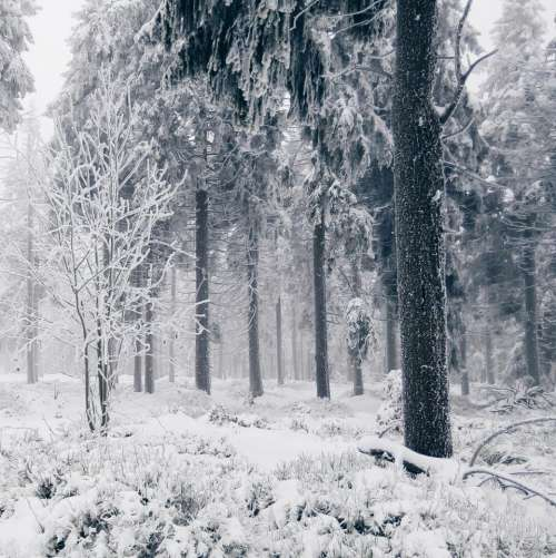 snow winter cold trees forest