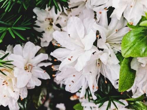 white flower bloom blossoms nature