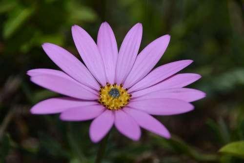 bokeh blur flower garden lavender