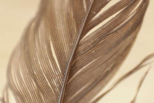 feathers plumage texture pattern strands