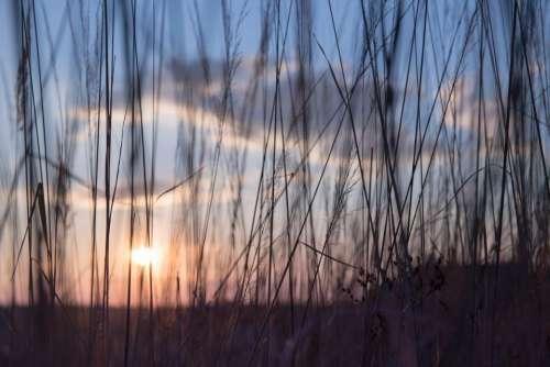 nature grass stems stalks sway
