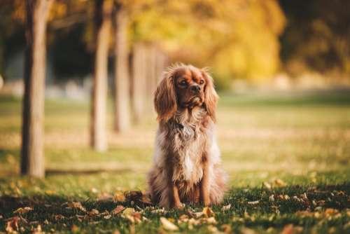 dog puppy animal pet playground