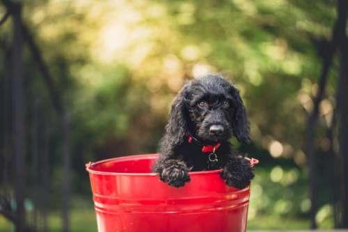 dog puppy pet animal bucket