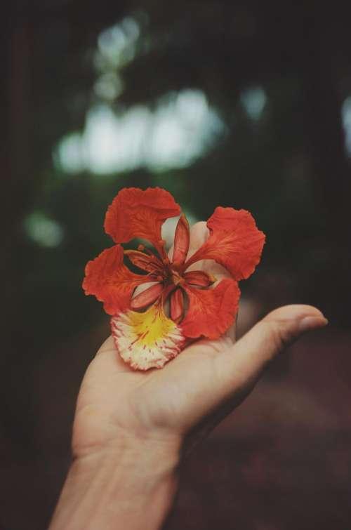 flowers nature blossoms stems stalk