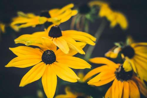 yellow flower nature plants petals