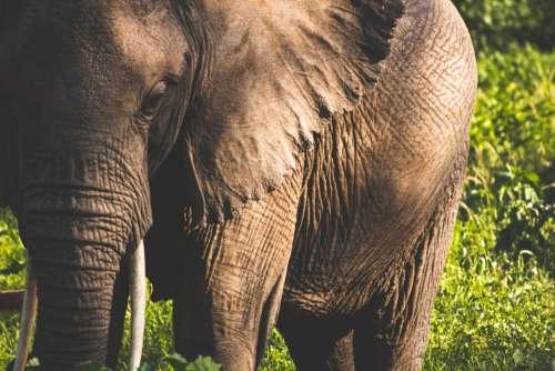 elephant animal wildlife skin texture