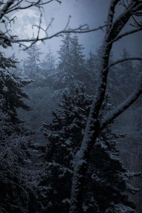 trees plant forest fog cold