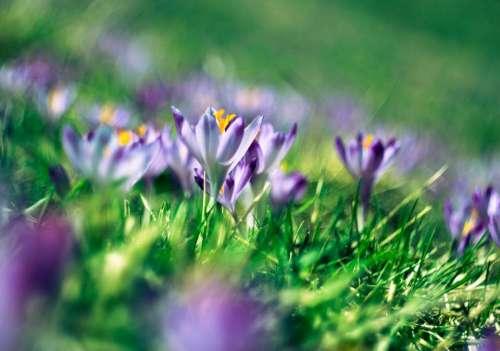 green grass purple flower petal